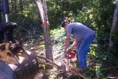 tree-clearing
